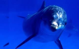К чему снится рыба женщине сонник ванги