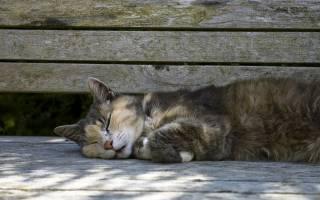 К чему снится смерть кошки сонник