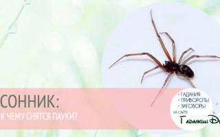 К чему снится паук крестовик сонник