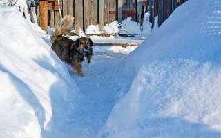 К чему снится сугробы белого снега сонник