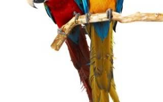 К чему снится большой белый попугай сонник