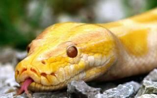 К чему снится большая желтая змея сонник