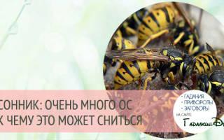 К чему снится укус осы в руку сонник