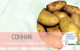 Сонник толкование снов к чему снится картофель