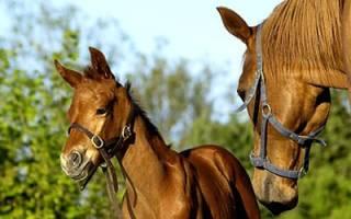 К чему снится лошадь с жеребенком женщине сонник