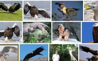 К чему снится большая черная птица сонник