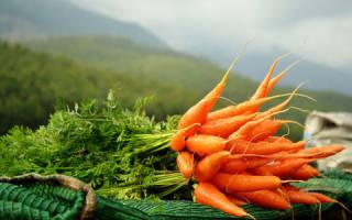 Есть морковь во сне сонник